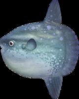 Ocean Sunfish NH.png
