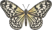 Paper Kite Butterfly NH.png