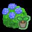 Blue-Hydrangea Start