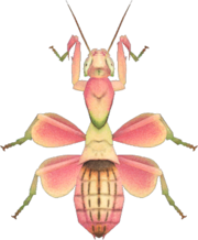 Orchid Mantis NH.png
