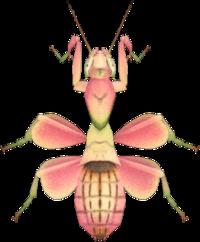Orchid Mantis NH.png