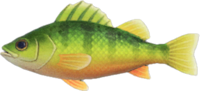 Artwork of Yellow Perch