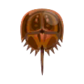 Horseshoe Crab PC Icon.png