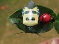 Manfacedstinkbug.jpg