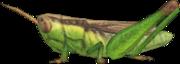 Rice Grasshopper NH.png