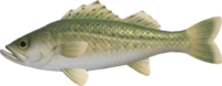 Sea Bass NH.png