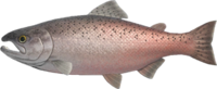 King Salmon NH.png