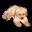 Labrador Model
