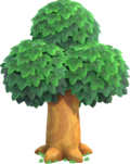 Oak Tree NH.png