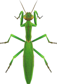 Mantis NH.png