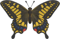 Tiger Butterfly NH.png