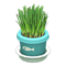 Cat Grass (Light Blue) NH Icon.png