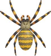 Spider NH.png