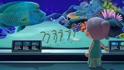 NH Spotted Garden Eels Museum Free Summer Update.png