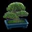 Pine Bonsai WW Model.png
