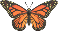 Monarch Butterfly NH.png