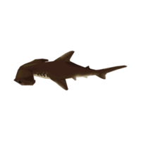 Hammerhead Shark CF Render.png