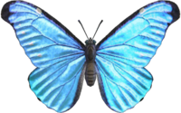 Emperor Butterfly NH.png