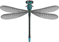 Damselfly NH.png