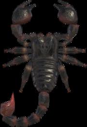 Scorpion NH.png